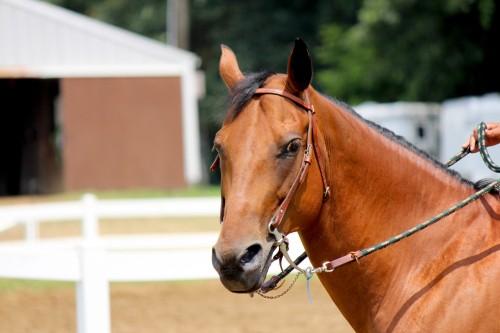 reins
