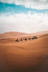 photo of camels on dessert